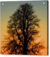 Dream Tree At Sunset Acrylic Print