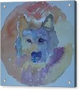 Dream Wolf Acrylic Print