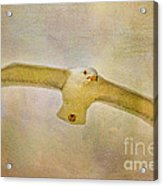 Dream World Seagull Acrylic Print