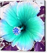 Dreamflower Acrylic Print