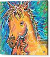 Dreamhorse Acrylic Print