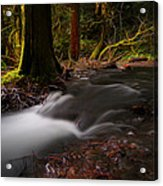 Dreaming Forest Acrylic Print