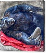 Dreaming Of Bananas Chimpanzee Acrylic Print