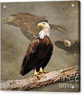 Dreaming Of Freedom Acrylic Print