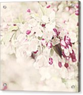 Dreaming Of Spingtime Blossom Acrylic Print