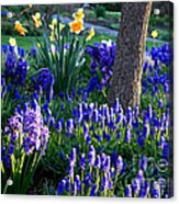 Dreaming Of Spring Acrylic Print by Carol Groenen