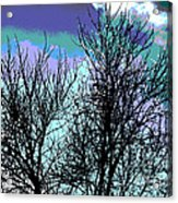 Dreaming Of Spring Through Icy Trees Acrylic Print