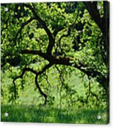 Dreaming Under The Old Oak Acrylic Print