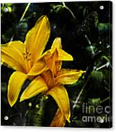 Dreams Of A Day Lily Acrylic Print