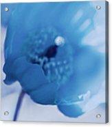Dreams Of Blue Poppy Flower Acrylic Print