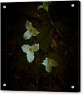 Dreamscapes - Trilliums 2 Acrylic Print