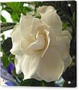Dreamy Creamy Gardenia Acrylic Print