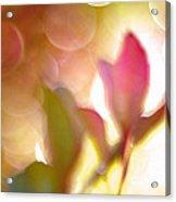 Dreamy Ethereal Pink Tulip Bokeh Circles Acrylic Print
