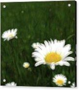Dreamy Gardens 10 Acrylic Print
