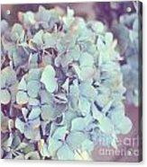 Dreamy Image Of Hydrangea Flower Acrylic Print