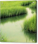 Dreamy Marshland Acrylic Print