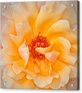 Dreamy Orange Rose Acrylic Print