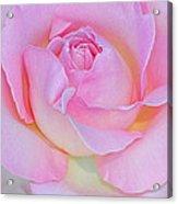 Dreamy Pink Acrylic Print