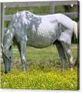 Dreamy Pony Acrylic Print