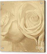Dreamy Roses Acrylic Print
