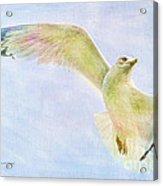 Dreamy Soft Seagull Acrylic Print