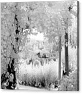 Dreamy Surreal Black White Infrared Arbor Acrylic Print
