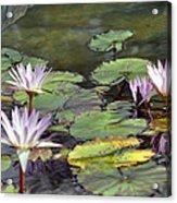 Dreamy  Water Lillies Acrylic Print