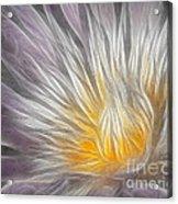 Dreamy Waterlily Acrylic Print