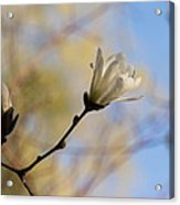 Dreamy Wild Magnolia In The Forest Acrylic Print