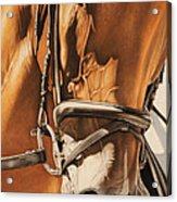 Dressage And Details Acrylic Print