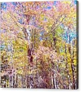Dressed For Fall Acrylic Print
