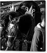 Dressed Horses Acrylic Print