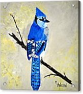 Dressed In Blue Acrylic Print