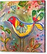 Drew Bird Acrylic Print
