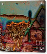 Dried And Growing From A Painted Rock Acrylic Print