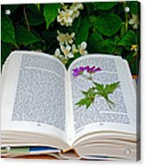 Dried Flower In A Book Acrylic Print