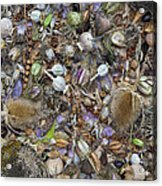 Dried Flower Seeds Acrylic Print