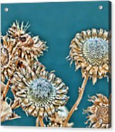 Dried Flowers Acrylic Print