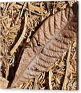 Dried Leaf Acrylic Print