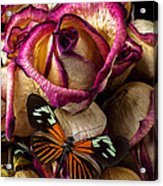 Dried Rose And Butterfly Acrylic Print