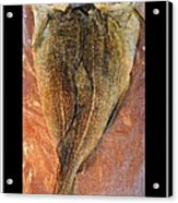 Dried Salted Codfish Back Acrylic Print