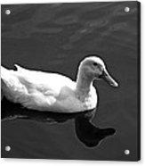 Driftin' Duck - Bw Acrylic Print
