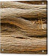 Driftwood 1 Acrylic Print by Adam Romanowicz