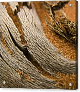 Driftwood 2 Acrylic Print by Adam Romanowicz