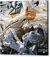 Driftwood Abstract Acrylic Print