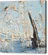 Driftwood Abstract Acrylic Print