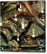 Driftwood Illume Acrylic Print