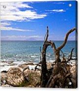 Driftwood Island Acrylic Print