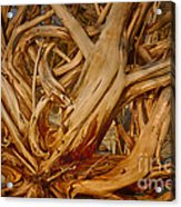 Driftwood Jungle Botany Bay Acrylic Print