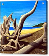 Driftwood - Nature's Artwork Acrylic Print